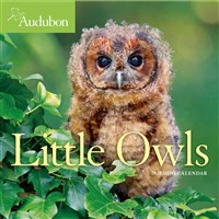 Audubon Little Owls Mini Wall Calendar 2020