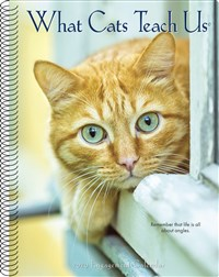 What Cats Teach Us 2020 Engagement Calendar