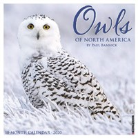 Owls of North America 2020 Mini Wall Calendar