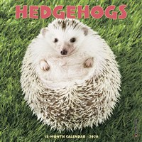 Hedgehogs 2020 Mini Wall Calendar