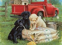 Just Dogs 1000-Piece Puzzle