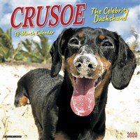 Crusoe the Celebrity Dachshund 2020 Wall Calendar (Dog Breed Calendar)