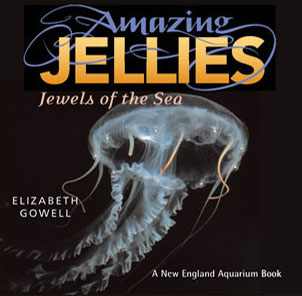 Amazing Jellies