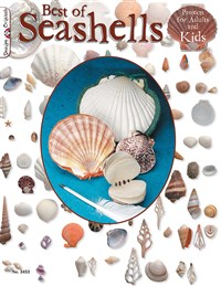 Best Of Seashells