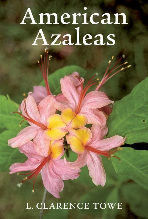 American Azaleas
