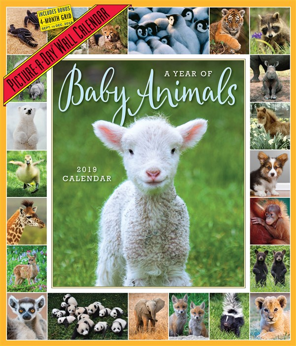 A Year of Baby Animals Picture-A-Day 2019