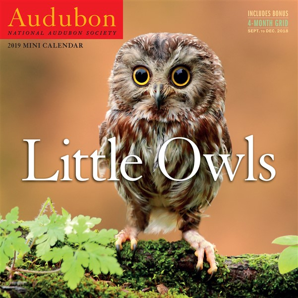 Audubon Little Owls Mini Wall Calendar 2019
