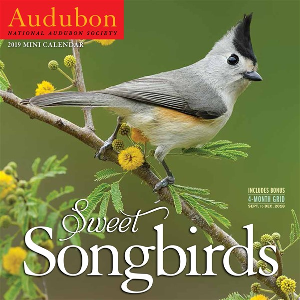 Audubon Sweet Songbirds Mini Wall Calendar 2019