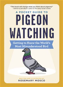 A Pocket Guide to Pigeon Watching